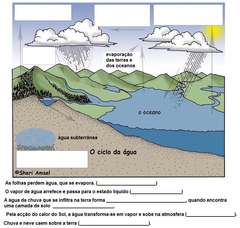 Actividades sobre a água para o 1º ciclo - Educação Online