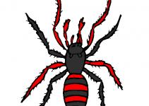 Aranhas para imprimir e colorir