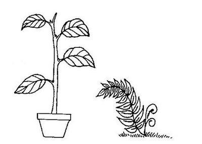 Plantas para colorir