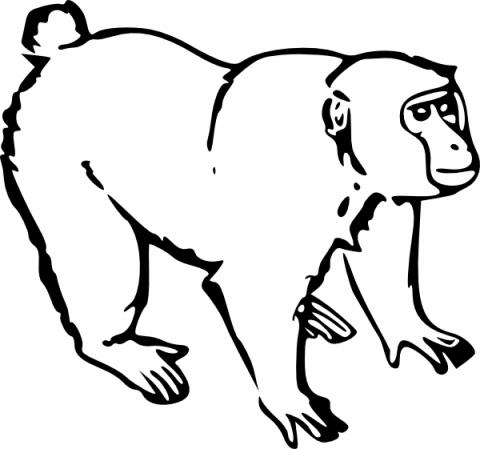 Imagens de macacos e gorilas para imprimir e colorir - 10