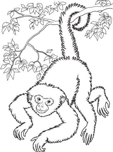 Imagens de macacos e gorilas para imprimir e colorir - 20