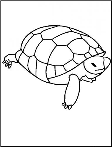 Imagens de tartarugas para imprimir e colorir - 11