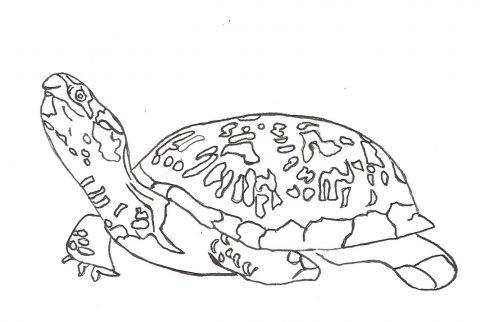 Imagens de tartarugas para imprimir e colorir - 15