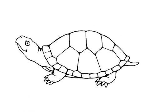 Imagens de tartarugas para imprimir e colorir - 18