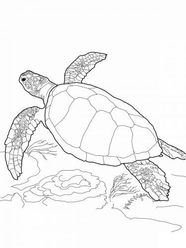 Imagens de tartarugas para imprimir e colorir - 19