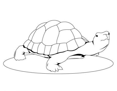 Imagens de tartarugas para imprimir e colorir - 20