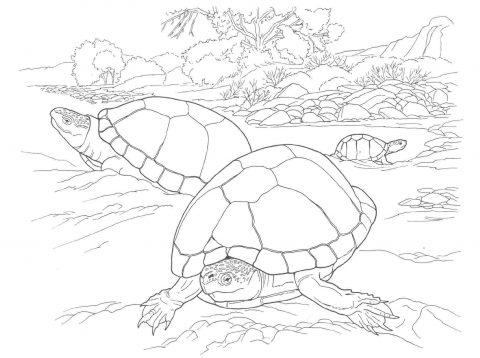 Imagens de tartarugas para imprimir e colorir - 22