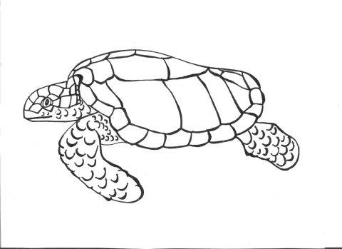 Imagens de tartarugas para imprimir e colorir - 23