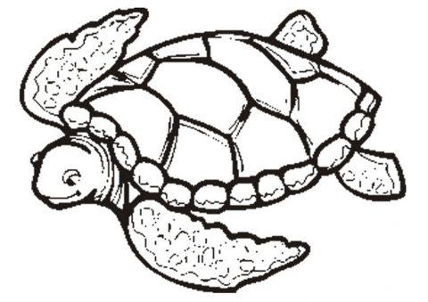 Imagens de tartarugas para imprimir e colorir - 26