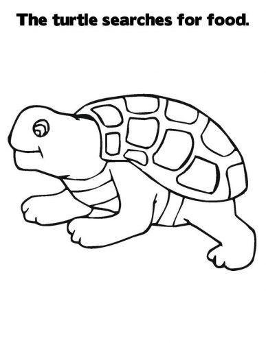 Imagens de tartarugas para imprimir e colorir - 29