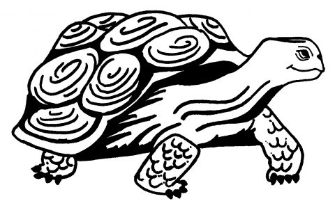 Imagens de tartarugas para imprimir e colorir - 7