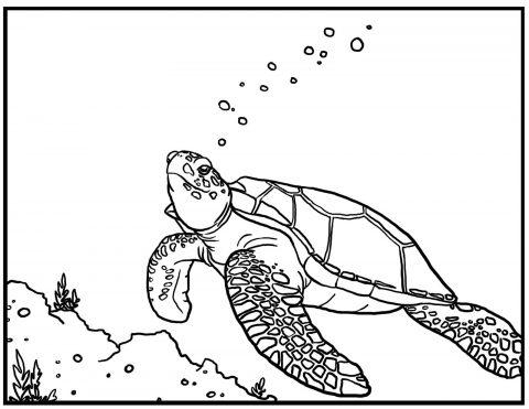 Imagens de tartarugas para imprimir e colorir - 8