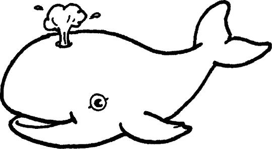 Baleias para colorir