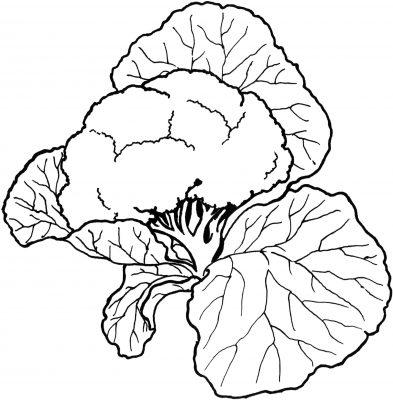 Imagens de legumes e verduras para imprimir e colorir 24