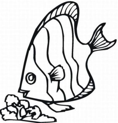 Imagens de peixes para imprimir e pintar- 13