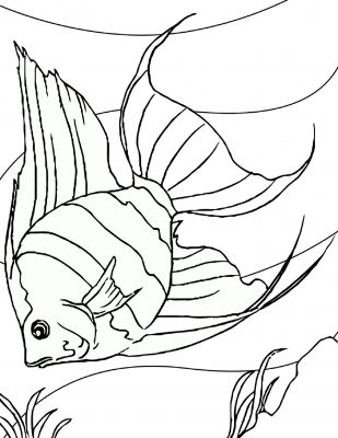 Imagens de peixes para imprimir e pintar- 2
