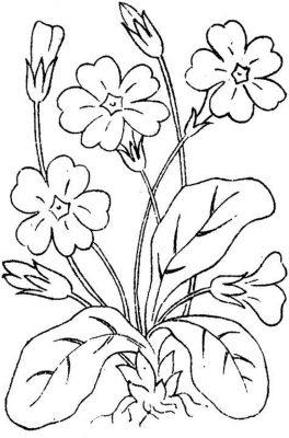 Imagens de plantas para imprimir e colorir 4