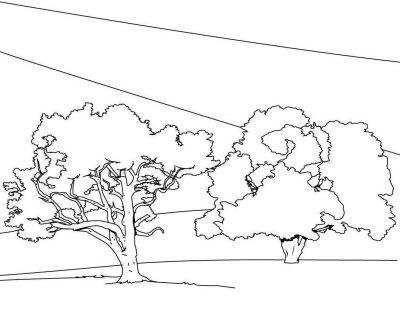 Imagens de árvores para imprimir e colorir - 11