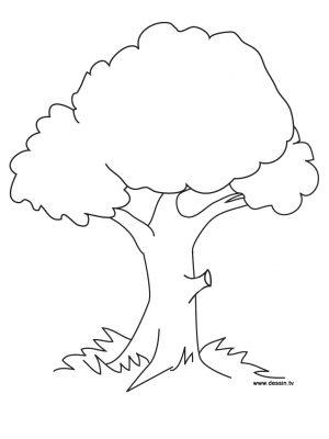 Imagens de árvores para imprimir e colorir - 22