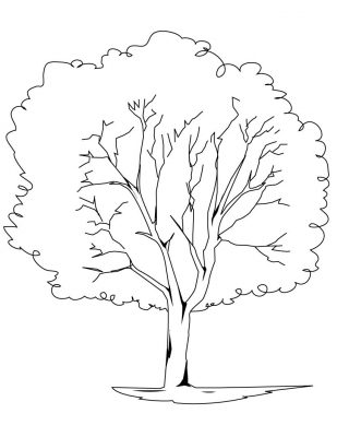 Imagens de árvores para imprimir e colorir - 6