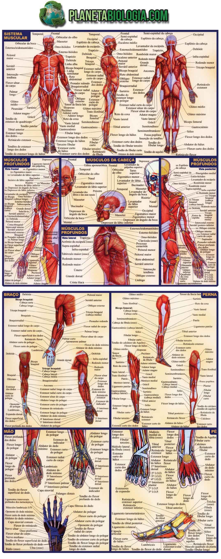 Sistemas do corpo humano anatomia