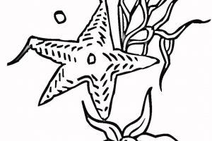 estrelas do mar para pintar