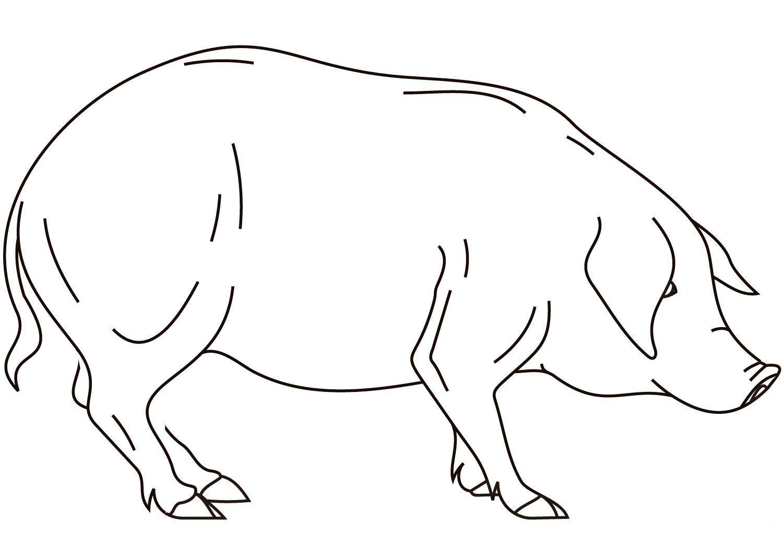 Desenho De Animais Do Zoológico Reunidos Para Colorir: Desenhos De Porcos Para Imprimir E Colorir