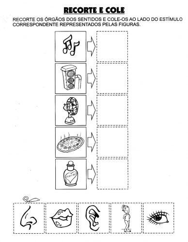 Estudo do Meio - Orgãos dos 5 Sentidos