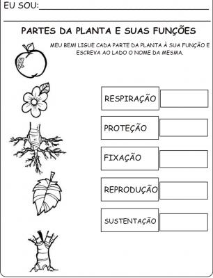 Atividades sobre as plantas