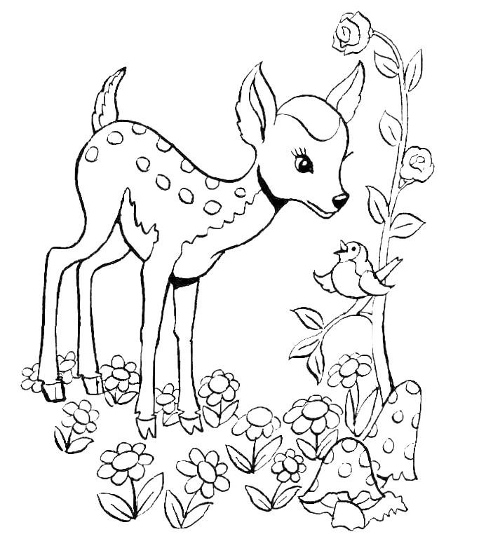 Imagens da primavera para imprimir e colorir 4 - Fichas e Atividades
