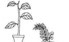 Imagens de plantas para imprimir e colorir