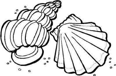 Imagens de conchas para imprimir e colorir