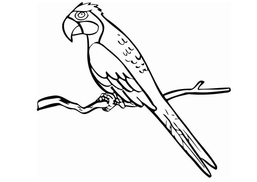 imagens de papagaios e araras para imprimir e colorir 13 fichas e