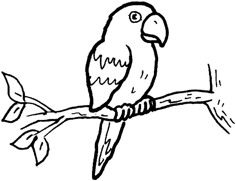 Imagens de papagaios e araras para imprimir e colorir