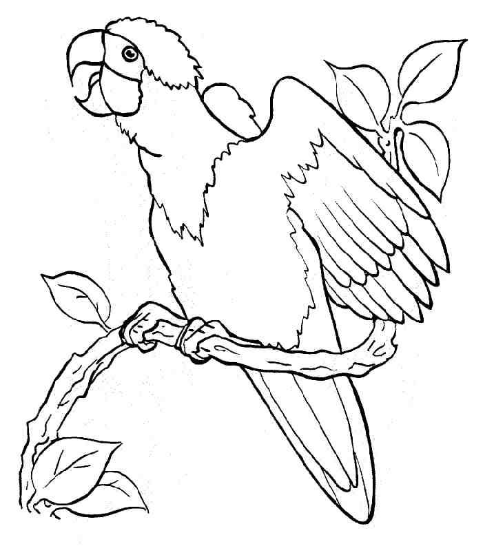 imagens de papagaios e araras para imprimir e colorir 7 fichas e