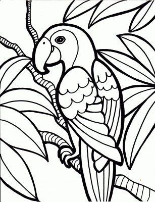 imagens de papagaios e araras para imprimir e colorir 8 fichas e