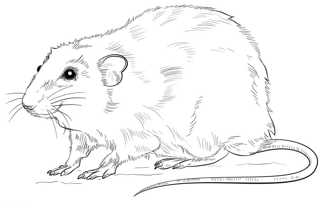 Imagens de ratos e ratinhos para imprimir e colorir