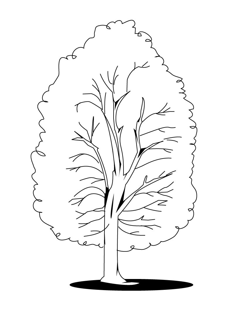 beech tree coloring pages - photo#12