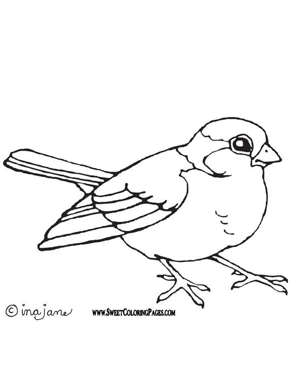 Imagens De Aves E Passaros Para Imprimir E Colorir