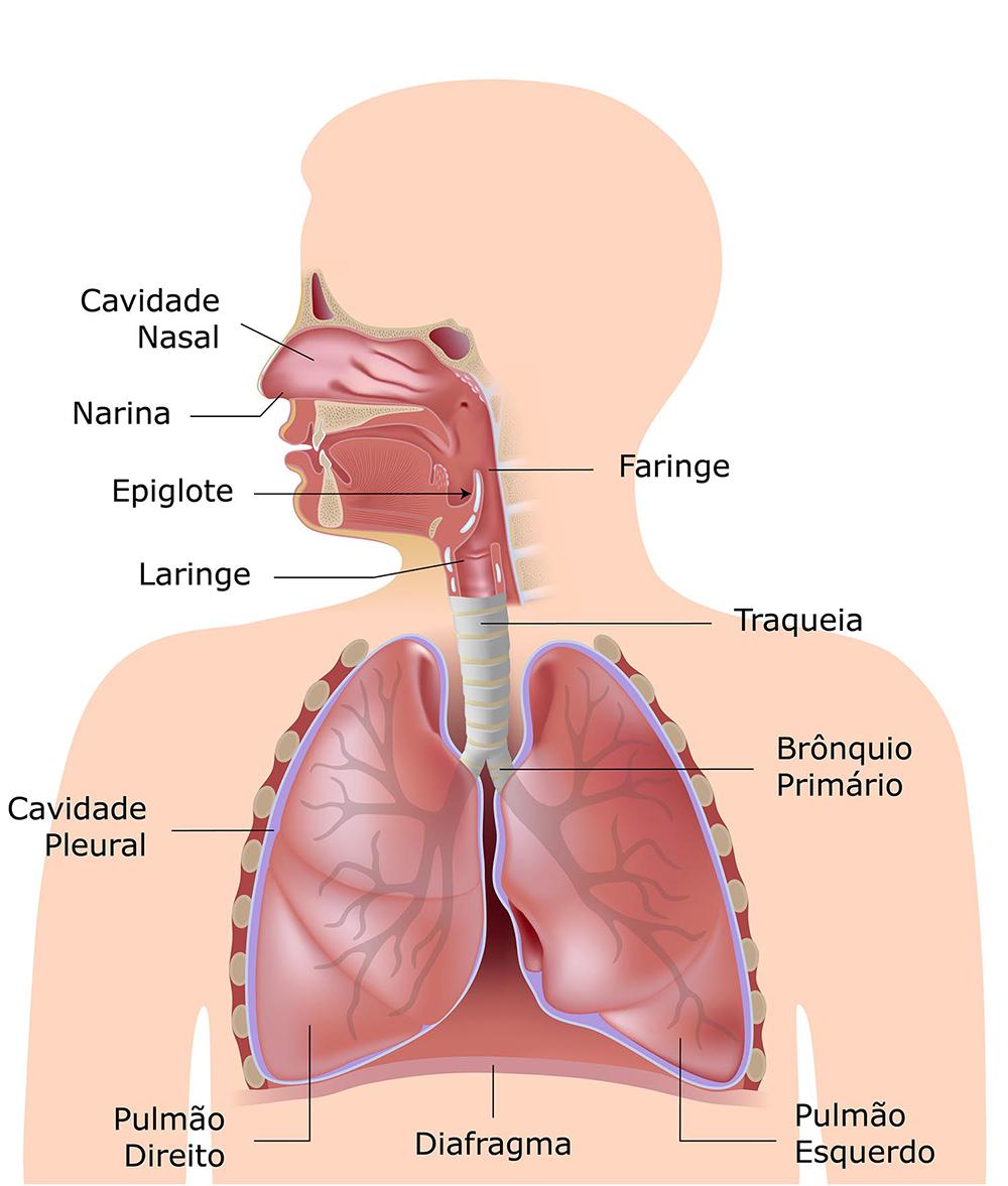 Quais são os sistemas do corpo humano