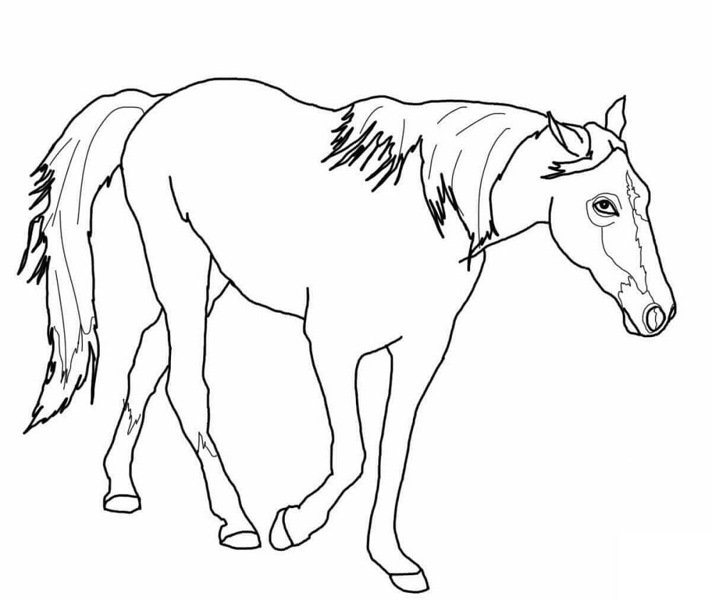 Imagens de cavalinhos para imprimir e pintar