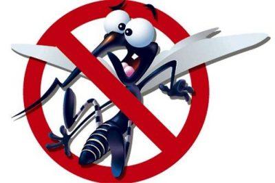 Atividades mosquito da Dengue