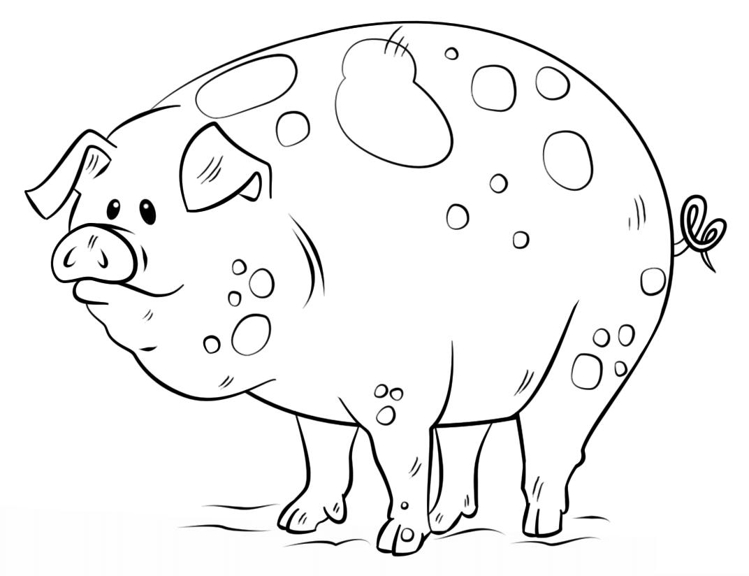 coloring pages of a pig - desenhos de porcos para imprimir e colorir fichas e