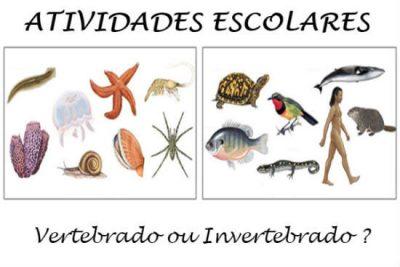 New Social - Vertebrados ou invertebrados